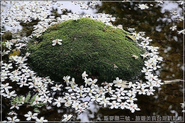 [桃園大溪] 2013客家桐花季 十一指古道 20130426