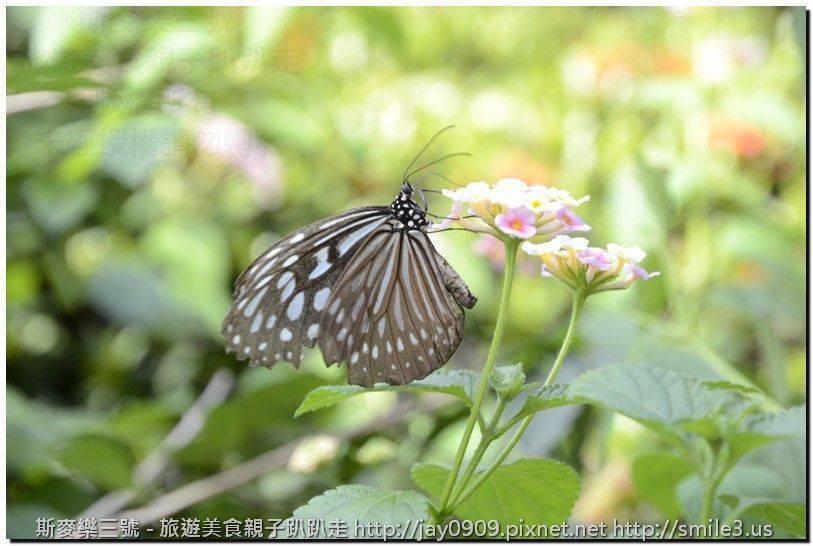 [台南仁德] 亞力山大蝴蝶生態教育農場 與蝴蝶近距離接觸 20160416